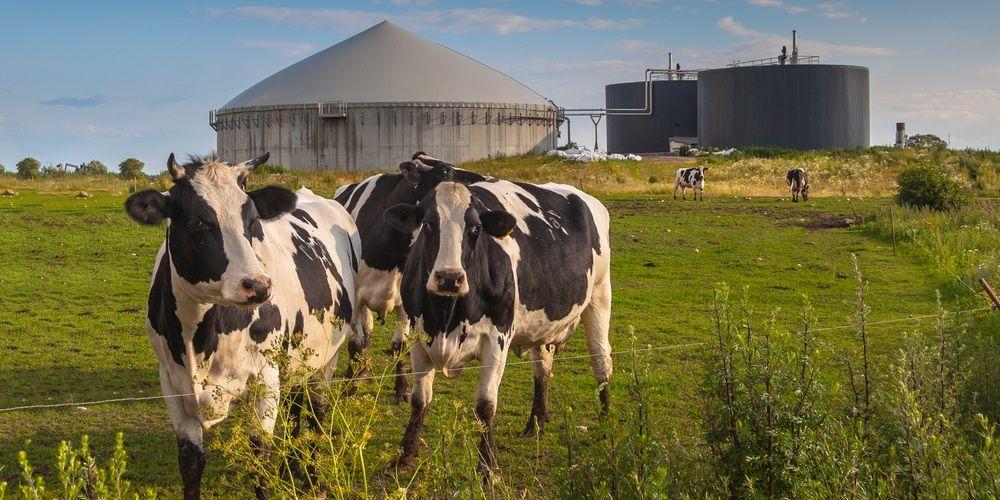 Energieverbruik uit biomassa met 10 procent gestegen