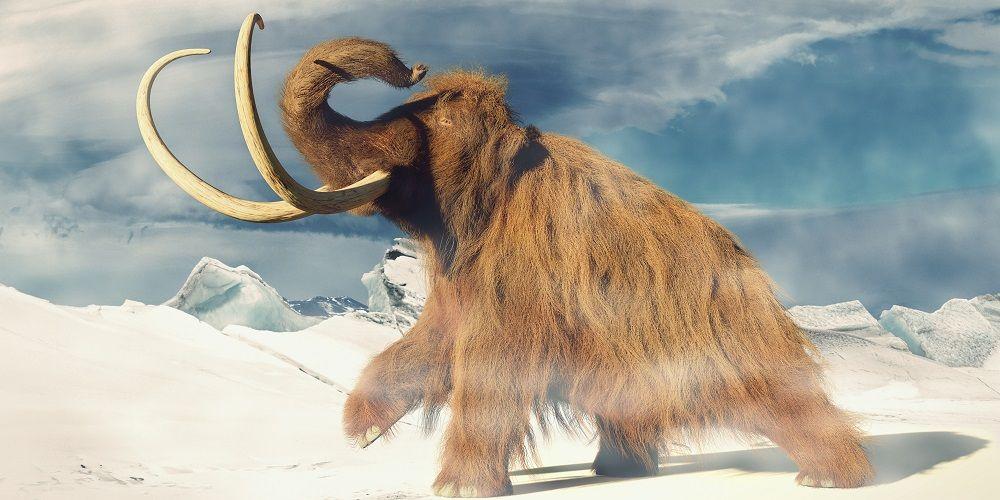 Hoe het klonen van mammoeten de opwarming van de aarde kan stoppen
